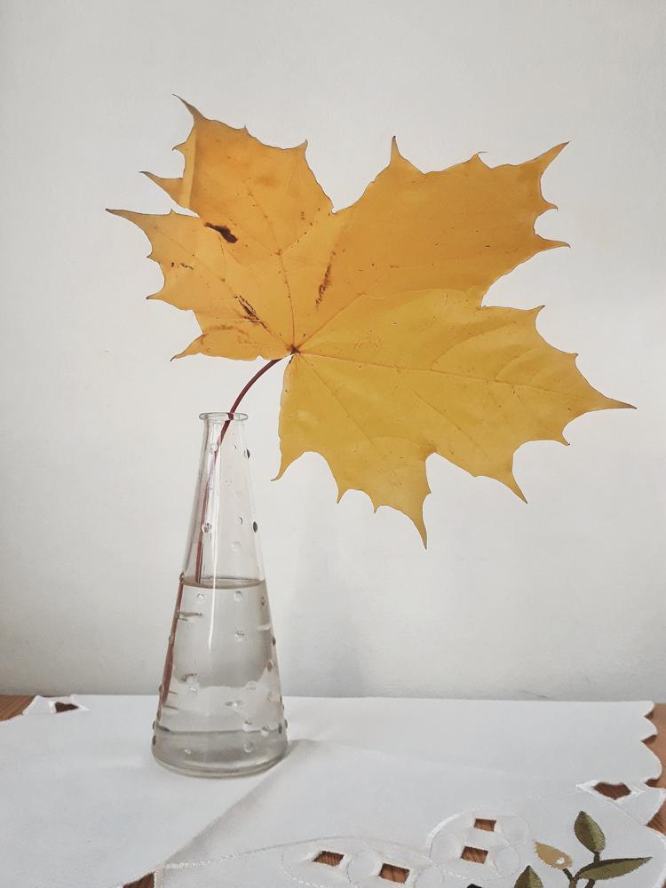 5 вещей недели: неделя 29, октябрь   Slow Life Blog