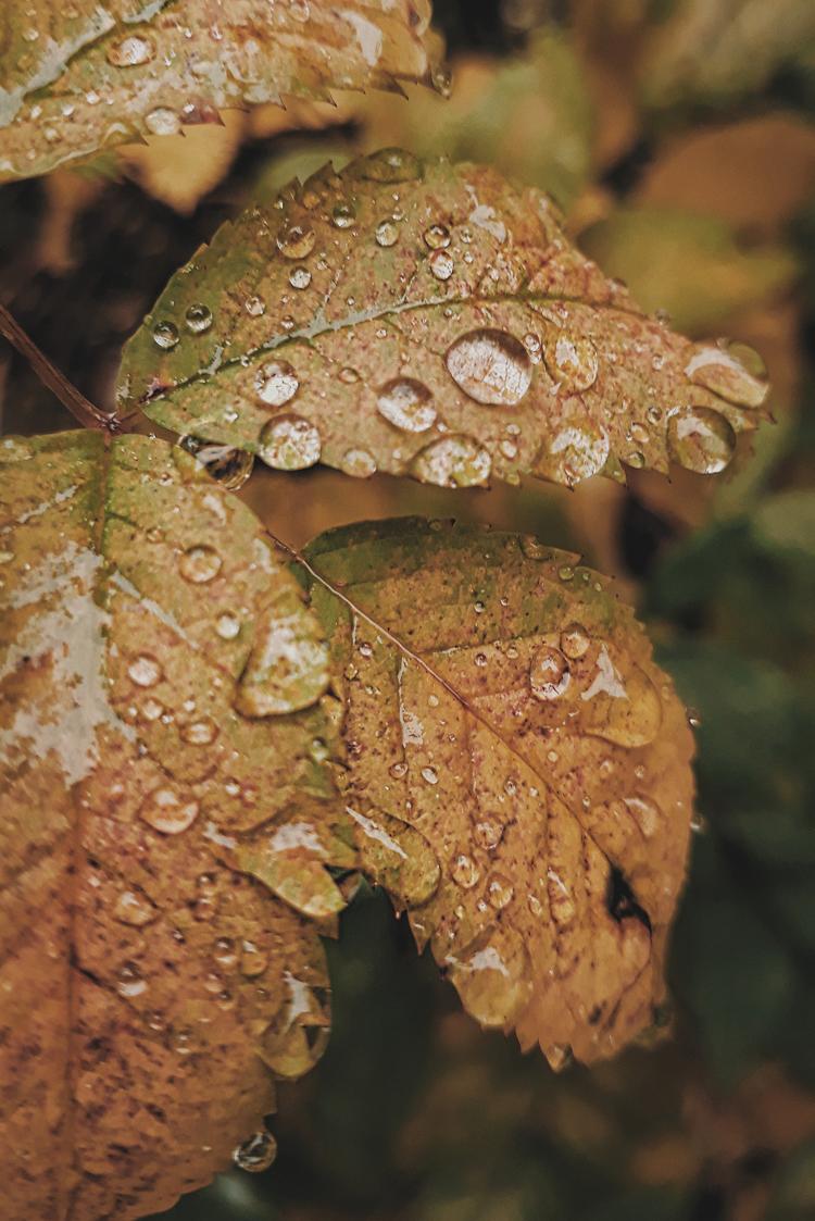 5 вещей недели: неделя 62, октябрь | Slow Life Blog