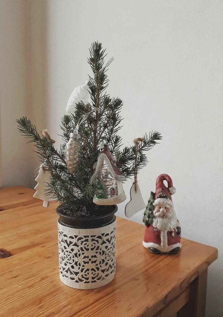 Новогодняя ель в горшочке | Slow Life Blog